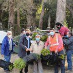 Corma ayuda a impulsar reforestación de bosques que se quemaron en comunas del Maule